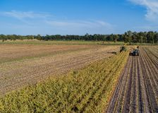 Hamburg Niemcy, Wrzesień, - 04, 2018: Kukurydzany żniwo, kukurudza furażuje żniwiarza w akci, żniwo ciężarówka z ciągnikiem w Ham fotografia stock