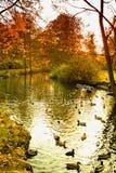 Hamburg, Park in autumn, Pond with ducks Royalty Free Stock Photos