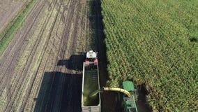 Hamburgo, Alemanha - 4 de setembro de 2018: Colheita de milho, ceifeira de forragem na ação, caminhão do milho da colheita com o  filme