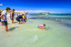 Tourists at Hamelin Bay. Hamelin Bay, Australia - Jan 1, 2018: child touches Eagle Ray close to shore in WA, one of best places in Australia to spot wild sting Royalty Free Stock Photo