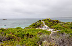 Hamelin Bay: Green Coastal Dunes Royalty Free Stock Photos