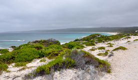 Hamelin Bay: Vegetated Dunes Stock Photography