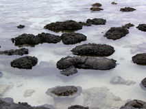 Hamelin Pool. Stromatolites are the oldest living organism on Earth Stock Images