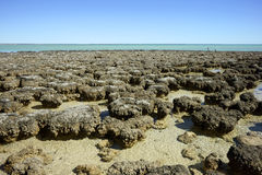 Hamelin pool Royalty Free Stock Photo