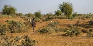 Hamer-Stamm in Turmi, Äthiopien lizenzfreie stockbilder