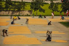 09/08/18, Hamhung, North-Korea: a North Korean propaganda planned economy site with a few people sorting grains of maize stock photos