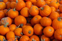 Hamilton, CANADÁ - 14 de octubre de 2018: pila de la pequeña naranja linda p imágenes de archivo libres de regalías