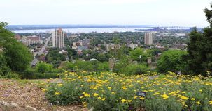 Hamilton, Canada, skyline with flowers in foreground 4K. The Hamilton, Canada, skyline with flowers in foreground 4K stock video