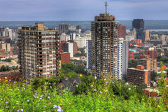 Hamilton, Canada skyline with wildflowers in foreground. The Hamilton, Canada skyline with wildflowers in foreground Royalty Free Stock Photo