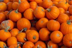 Hamilton, KANADA - 14. Oktober 2018: Stapel kleiner netter Orange p lizenzfreie stockbilder