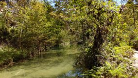 Hamilton pool reserve. Swamp like river Stock Images