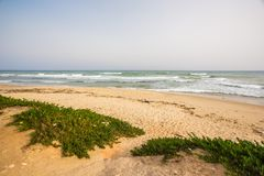 Hammamet in Tunesië Stock Fotografie