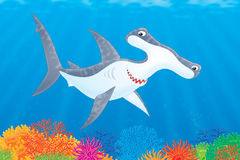 Hammer-headed shark Stock Images