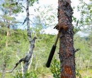 Hammer. Old forgotten hammer hanging on tree Stock Photos