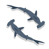 Hammer sharks Stock Images