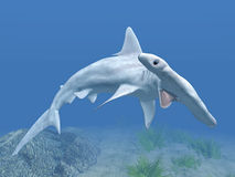Hammerhead Royalty Free Stock Photography