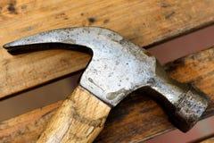 Hammerhead Foto de Stock Royalty Free