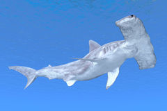 Hammerhead Royalty Free Stock Photo