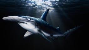 Hammerhead do tubarão ilustração do vetor