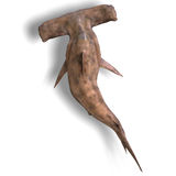 Hammerhead shark Royalty Free Stock Images