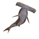 Hammerhead shark. 3D rendering of a hammerhead shark with clipping path and shadow over white Stock Photos