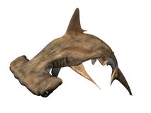 Hammerhead Shark. Isolated on white. Computer Generated Image, 3D Models Stock Images