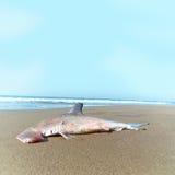 Hammerhead shark Stock Photos