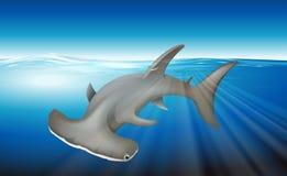 Hammerhead Shark. Illustration of a hammerhead shark Royalty Free Stock Photos