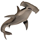 Hammerhead Shark Royalty Free Stock Photos
