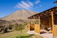 Hammoc and resting in elqui Valley in Chil. E. Landscape and mountains royalty free stock photos