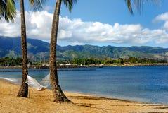 Hammoch på den hawaii stranden Royaltyfri Fotografi