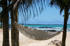Hammock. White hammock underneath palm-trees inviting for relaxation Royalty Free Stock Photos