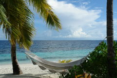 Hammock. Under palm trees on a island in the Maldives stock photography