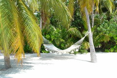 Hammock. Under palm trees on a island in the Maldives stock photo