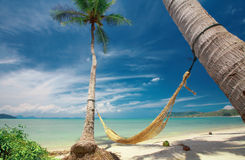 Hammock. View of nice yellow straw hammock hanging between two palms stock photo