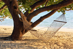 The hammock. Hangs from the tree at the beach in the morning Stock Images
