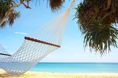 Hammock. View of nice white hammock hanging between two palms stock photo