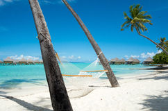 Hammock on beach with palm trees in Bora Bora Stock Photos