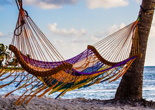 Hammock on the Beach. Hammock swinging from two palm trees on a beach in Belize Royalty Free Stock Photography