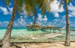 Hammock in a beach in Tikehau. Tahiti stock photos