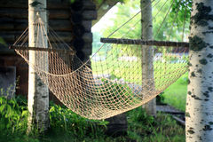 Hammock between birches like a web Stock Images