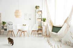 Hammock and cat in room. Hammock with green pillow and cat in bright dining room interior with plants, posters and lamp above table and white chairs Royalty Free Stock Images