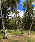 Hammock between coconut trees in tropical paradise Royalty Free Stock Photography