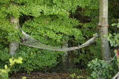 A hammock in deep green forest Stock Photo