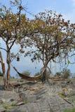 Hammock di bambù per rilassamento Fotografia Stock Libera da Diritti