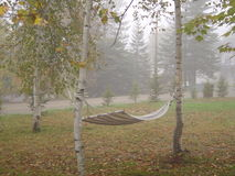 HAMMOCK ON A FOGGY DAY. A hammock is tied to white birch trees on a foggy fall day Royalty Free Stock Images