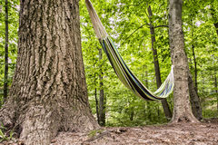 Hammock in the forest Royalty Free Stock Image