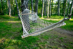 hammock in the forest Stock Image