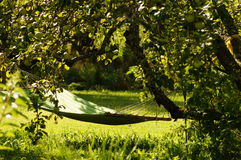 Hammock in garden between trees on sunny day Royalty Free Stock Photos