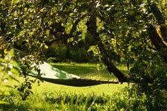 Hammock in garden between trees on sunny day Royalty Free Stock Photos